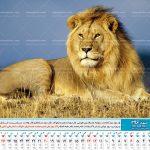 تقویم رومیز عکس شیر پلنگ