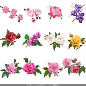 وکتور انواع گل AI و TIF