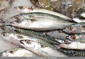 عکس با کیفیت بچه ماهی
