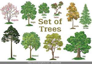 وکتور مجموعه درخت