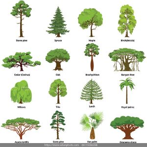 وکتور درخت وکتور مجموعه درخت