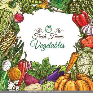وکتور بکگراند سبزیجات