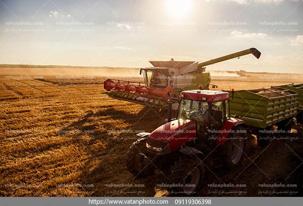 عکس برداشت از مزرعه برنج